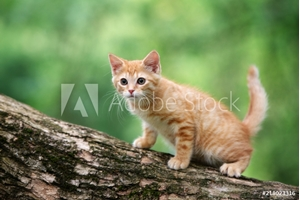 Bild på red tabby kitten posing on a tree outdoors